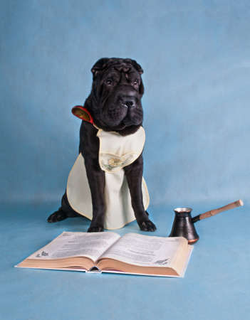 Young Black Dog Is Learning to Cook Stock Photo - 6992593