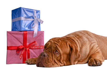 guessing: Guessing whats inside those present boxes - hopefully something tasty !  Stock Photo