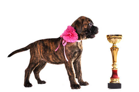 Champion Puppy Standing near a Cup photo
