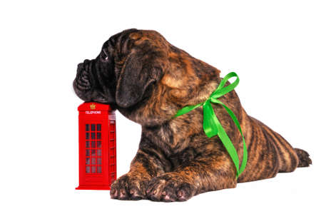 Puppy Waiting for a call on a Telephone Booth photo
