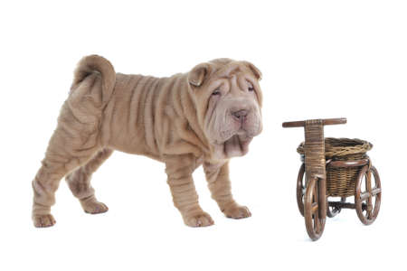 Funny Puppy near a Vintage Shopping Cart photo