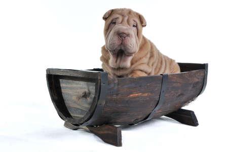 Shar-Pei puppy in Half Barrel Boat photo