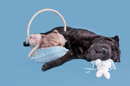 pall: two dogs asleep after a day full of games. Stock Photo
