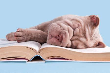 niedlichen kleinen Welpen eingeschlafen, �ber ein Buch von M�rchen  Lizenzfreie Bilder - 7237019