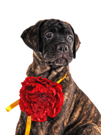 Proud Puppy sitting with a Flower photo