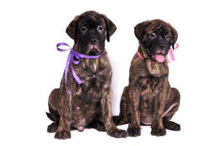 Two Cute Puppies sitting close photo