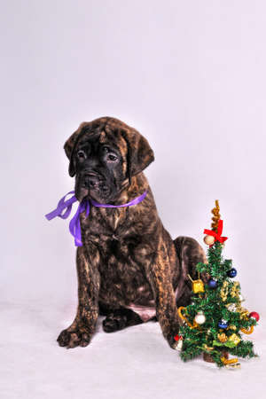 Cute Puppy sitting near a Christmas tree photo