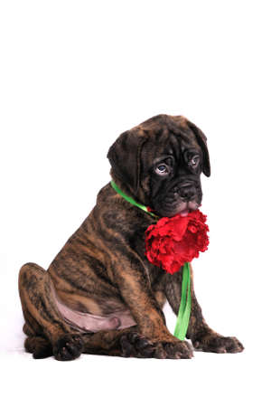 Shy Puppy sitting with a flower photo