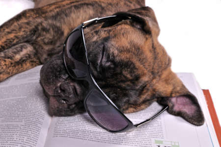 Puppy in glasses sleeping on book. photo