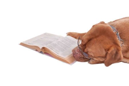 Dog de bordeaux is tired of reading a book photo