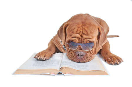 Dog hiding behind glasses while having a nap over a book photo