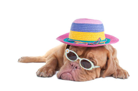 Dog with a summer hat and sunglasses dreaming of seashore photo
