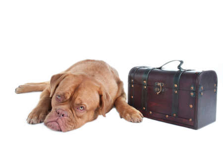 molosse: Dog with its luggage packed in a trunk