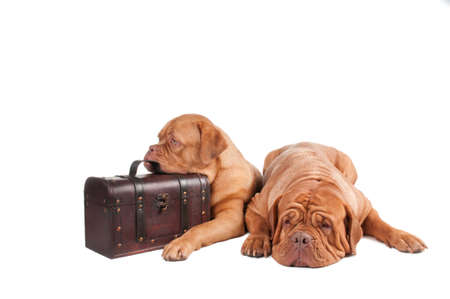 Two dogs finished packing and ready to go on holyday photo