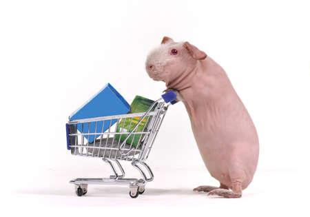cavie: Shopper animale divertente con un carrello del supermercato