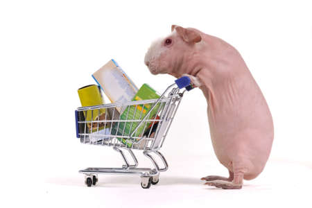 foodie: Guinea Pig is Busy Shopping with Shopping Cart Stock Photo