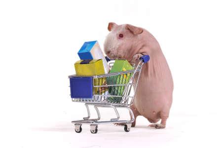 cavie: Animale roditore � con un cesto pieno di supermercato Archivio Fotografico