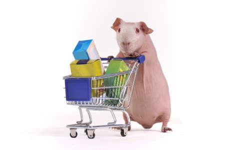 cavie: Cavia ha acquistato alcune cose in un supermercato