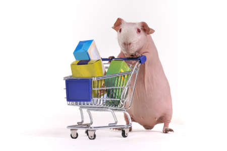 Guinea Pig has purchased some stuff in a supermarket photo