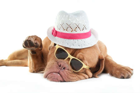 Mafia looking dog saying