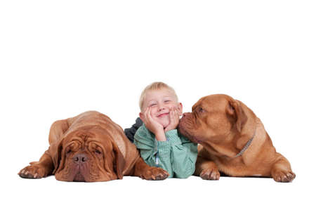 Smiling boy lying between two dogs on the floor