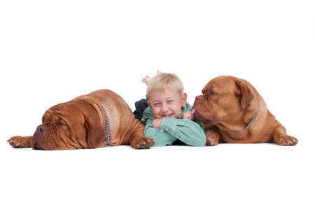 master: Smiling boy lying on th efloor among two big dogs