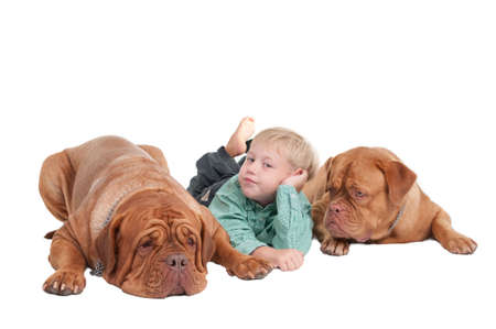 Young boy and two big dogs lying photo