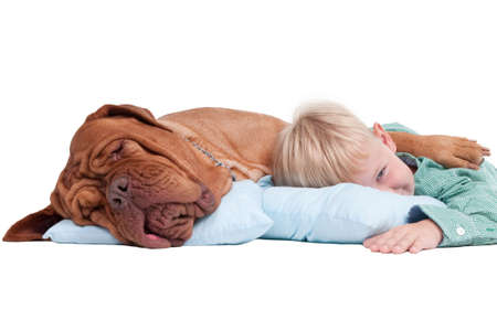 Big dogue de bordeaux and impish boy lying on blue pillows