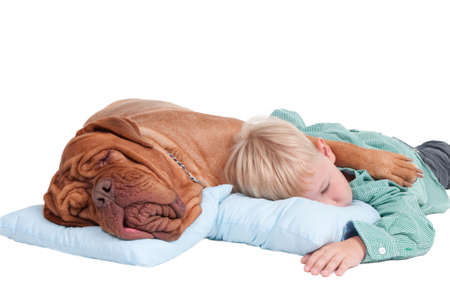 Big dogue de bordeaux and small boy sleeping on blue pillows photo