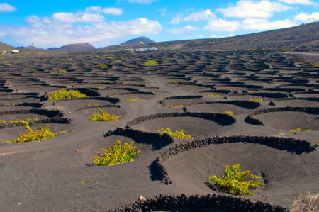 walled: La Geria - vineyard region of Lanzarote, Canary Islands, grape vines grow in small walled craters in black volcanic ash  Stock Photo