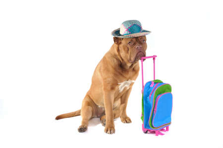 Dog is Ready to go on a holiday trip somewhere photo