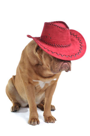 Puppy is sitting with its face hidden under a big red sombrero. photo