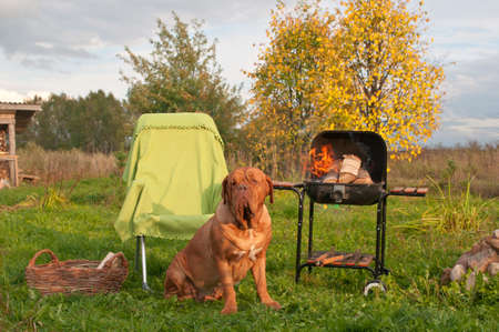 Big Dog is waiting for a Picnic Stock Photo - 11697243
