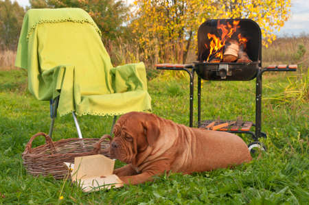 Smart Big Dog is Reading a Book while on Picnic outdoors photo