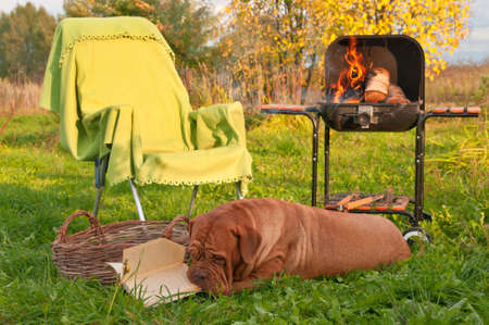 Smart Dog is Tired after Picnic Reading a book photo