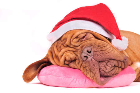 Santa Dog is Dreaming of Christmas photo