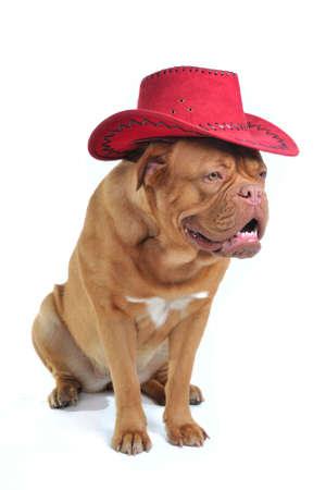 Stylish Big Dog in Cowboy Hat photo