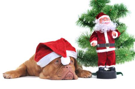 Santa Dog and Real Santa under a Christmas tree photo