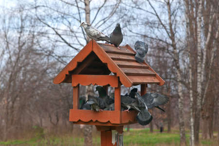 multiple image: Many Pigeons in a bird Feeder