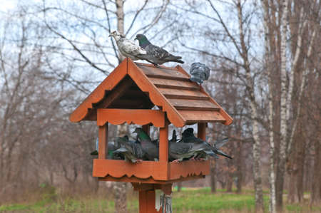 overcrowded: Overcrowded Bird Feeder with a Lot of Birds