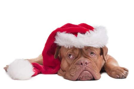 occhi tristi: Triste cucciolo con cappello di Babbo Natale, aspettando il Natale