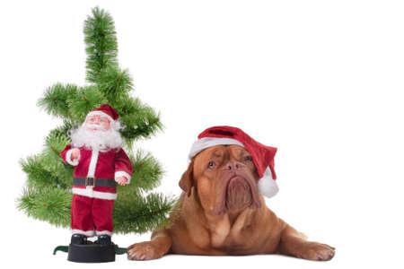 Puppy lying near a small Christmas tree photo