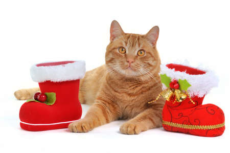 Funny Xmas Red Haired Kitten photo