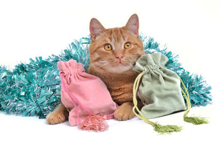 Lovable Kitten with Christmas Gifts photo
