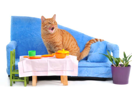 Cat Licking itself after a Meal on a cozy sofa photo
