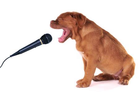 dog rock: Cute Puppy is Happy Singing