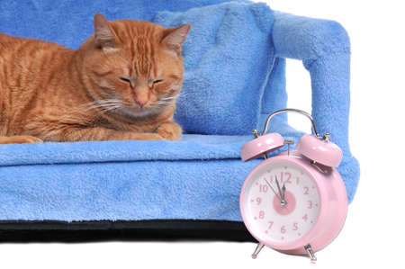 Cat Sleeping with Alarm-Clock photo