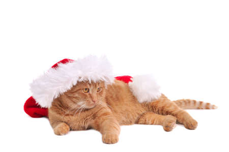christmas pussy: Lazy Santa Pussy Cat in Christmas Hat