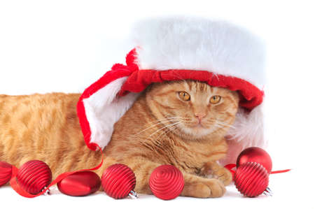 Kitten in Christmas Hat with Christmas Balls photo