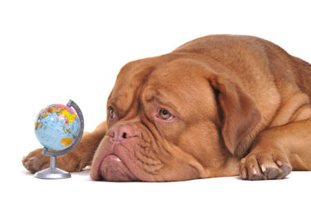 Puppy if thinking of its dream travels around the globe photo